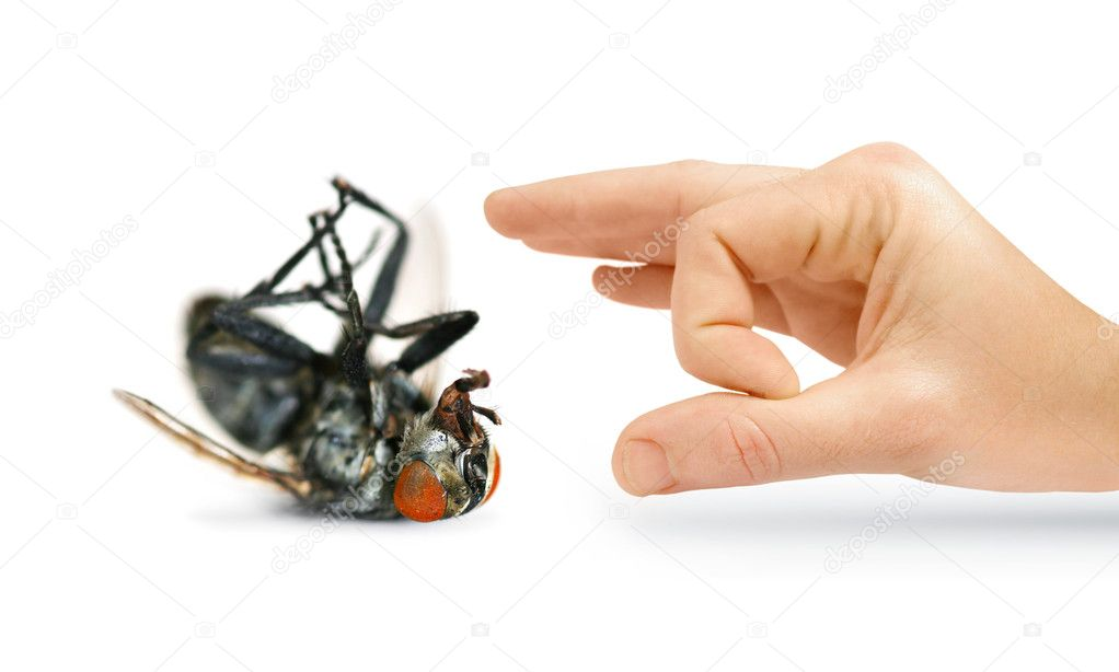 Give Pests The Flick With An Isolated Hand Flicking A Huge Dead Fly — Stock Photo #10313316