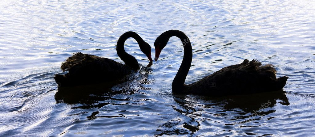 Silhouetted Elegance Is The Romantic Dance From Love Birds On Swan Lake — Stock Photo #10313415