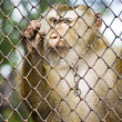 Sadness In Captivity - Stock Photo