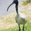 Carpark Ibis — Stock Photo