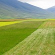 Flower hills in Castelluccio di Norcia, Italy — Stock Photo #7962700