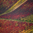 Stock Photo: Vineyard hills in Italy