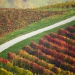 Vineyard hills in Italy — Stock Photo