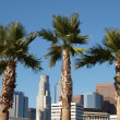 LA Palms — Stock Photo #7965627