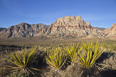 Yucca e arenaria del nevada — Foto Stock
