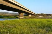Bridge and Blooms — Stock Photo