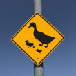 Duck Crossing — Stock Photo