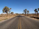 дерево джошуа шоссе — Стоковое фото