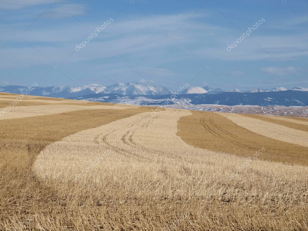 Golden fields and snow cap mountains under winter skies. — Stock Photo #8074062