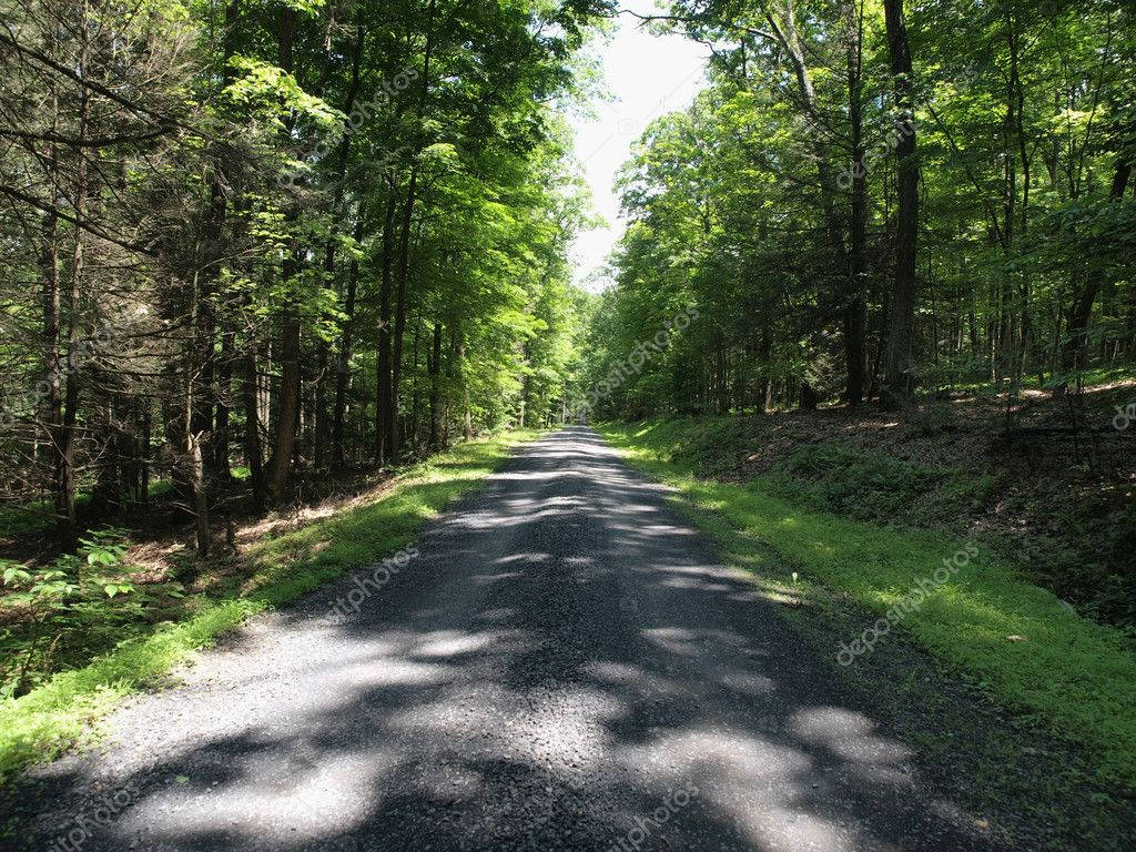 Dapple light on a gravel forest road in central Pennsylvania.  Stock Photo #8084018