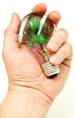 Hand Holding Light Bulb with Artificial Tree — Stock Photo