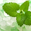 Stock Photo: Sprig of lemon balm against salt crystals