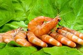 Fresh shrimp on lettuce leaf — Stock Photo