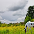 The white horse on the meadow — Foto de Stock