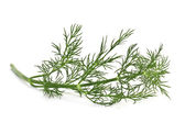 Branch of fresh dill isolated on a white background — Foto de Stock