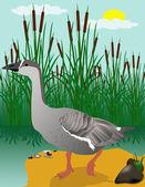 Vector illustration goose on marsh — Stock Vector