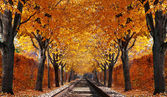 Abandoned railroad in autumn forest — Stock Photo
