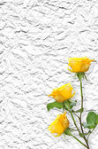 Old paper background with beautiful roses — Stock Photo