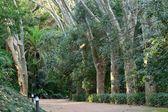 Malaga Historic Park — Stock Photo