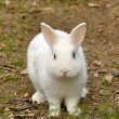 Rabbit in park — Stock Photo #8747808