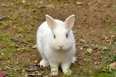 Rabbit in the park — Stock Photo