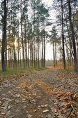 ścieżka w lesie — Zdjęcie stockowe