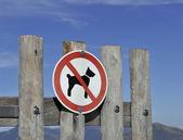 Aucun signe de chien — Photo