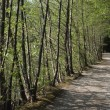 Stock Photo: Footpath trough trees