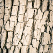 Bright bark texture — Stock Photo