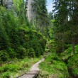 Footpath in the forest - Stock Photo