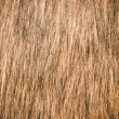 Brown fur — Stock Photo