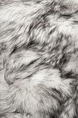 Polar fox fur texture — Stock Photo