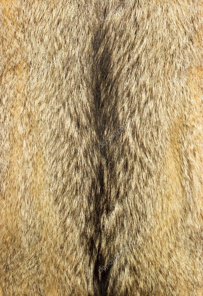 White Wolf Fur Texture