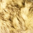 Fox fur texture - Stock Photo