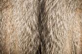 Wolf fur — Stock Photo