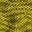 Reptile skin texture — Stock Photo