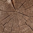 Tree rings — Stock Photo