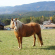 Horse on a ranch — Stock Photo #8052770