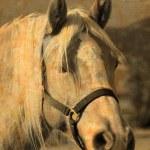 Horse portrait — Stock Photo #8052847