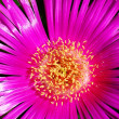 Beautiful flower closeup - Stock Photo