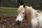 White horse portrait — Stock Photo