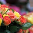 Multicolored Roses — Stock Photo #9005877