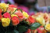Různobarevné růží — Stock fotografie