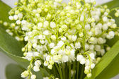 A bouquet of lilies of the valley — Stock Photo
