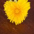 Heart shaped dandelion — Stock Photo #10106371