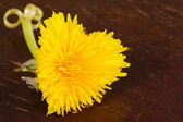 Heart shaped dandelion — Stock Photo