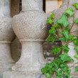Pillars with ivy — Stock Photo