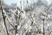 Snow branches — Stock Photo