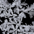 Snow crystals - Stock fotografie