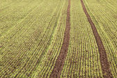 Tracks in a field — Stock fotografie
